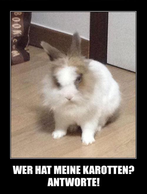 141104-evil-rabbit